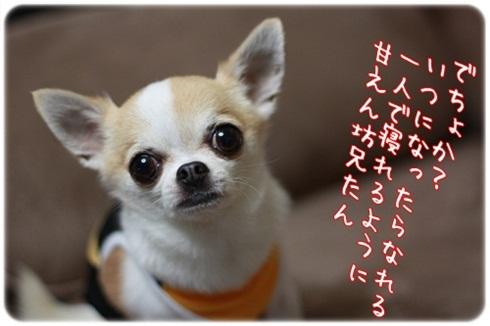 009_20110715211925.jpg
