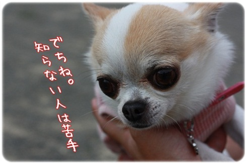010_20110726201546.jpg