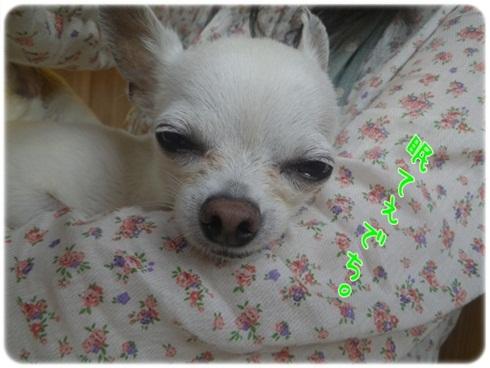 010_20110911183027.jpg