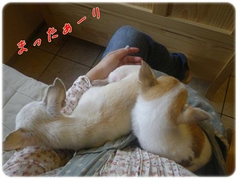 011_20110911183119.jpg