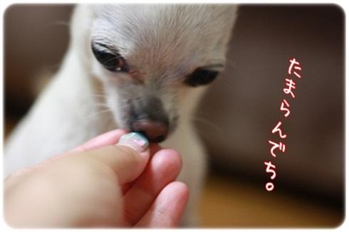 024_20110810210323.jpg