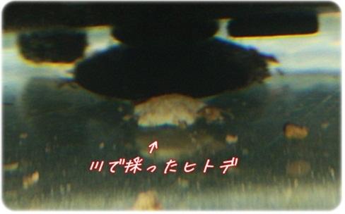 237_20110615213220.jpg