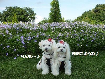 花かごしま15