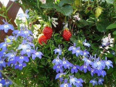 花かごしま13