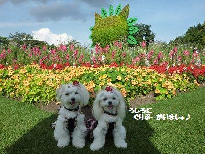 花かごしま11