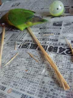 割り箸で遊ぶ①
