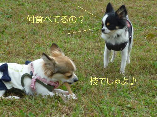 コピー ~ resize0032
