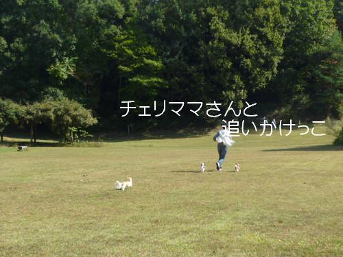コピー ~ resize0029
