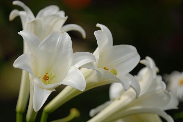 ハービルの花1