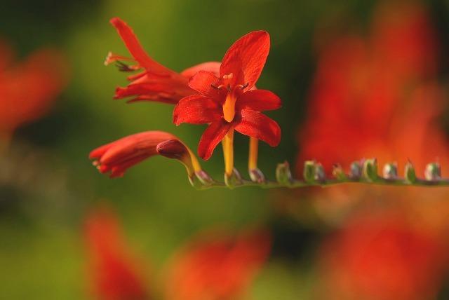 ハービルの花2