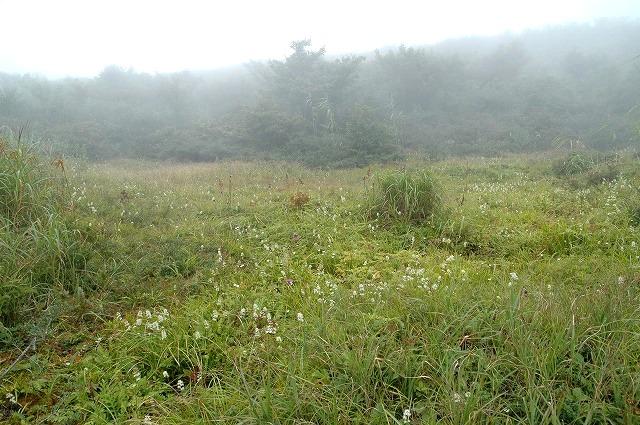 湿地のお花畑1