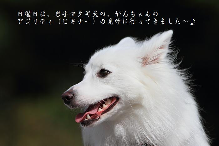 ブログ用700x46745