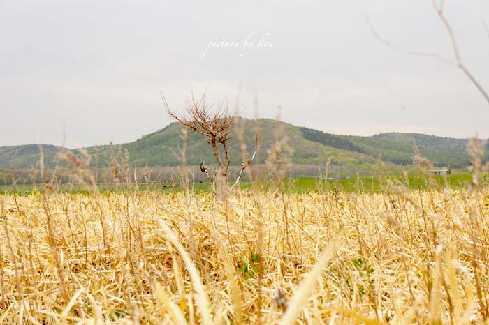 201106notoro10.jpg
