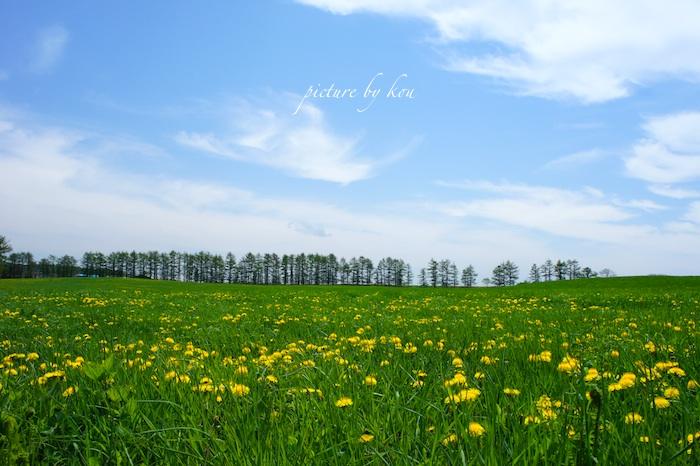 201106tanpopo3.jpg
