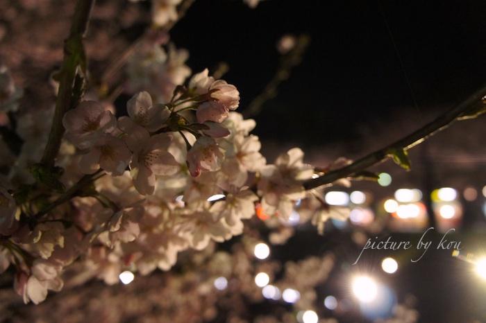 2011GWyorusakura2.jpg