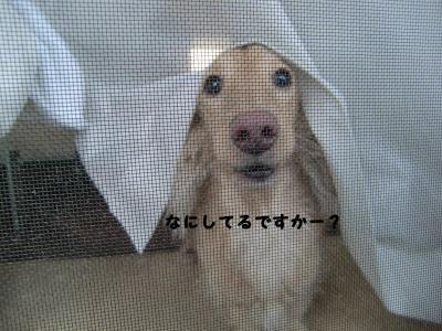 100_0909.jpg