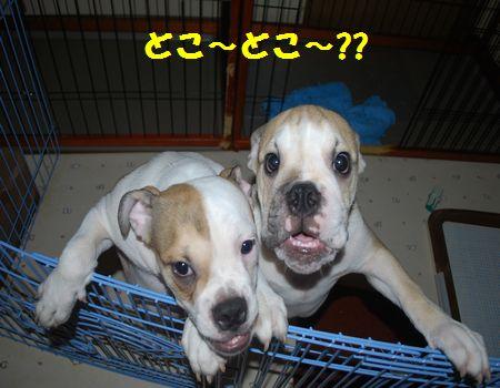 DSC_0017_20110822074442.jpg