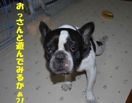 DSC_0068_20110616140459.jpg