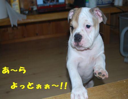 DSC_0091_20110621210321.jpg