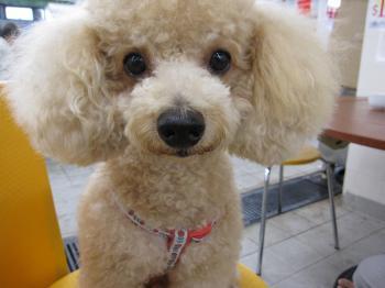 香港市場犬アップ