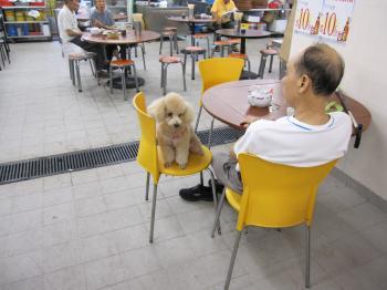 香港市場老人と犬