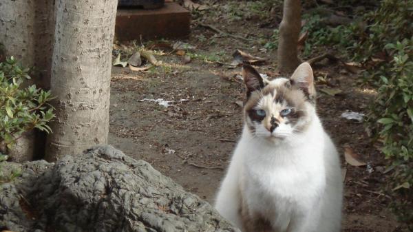 企んでいる猫縮小2
