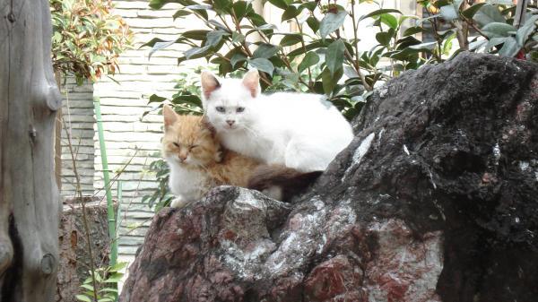 2匹の猫縮小