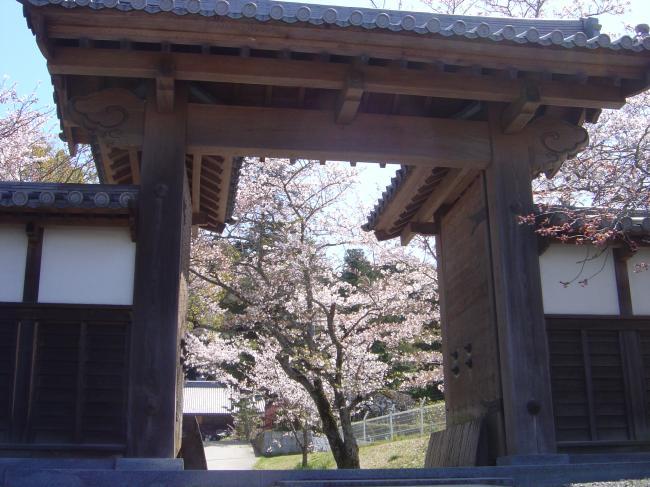 山門から桜縮小