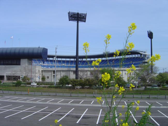 菜の花と坊ちゃんスタジアム縮小