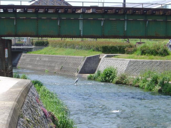 鉄橋と白鷺縮小