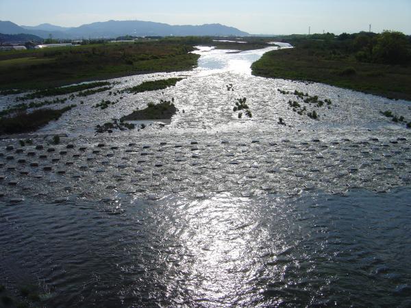 重信川下流再縮小