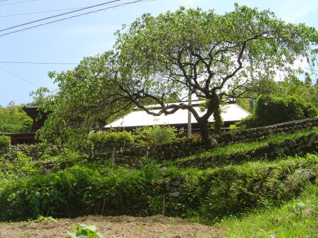 大木と民家3縮小