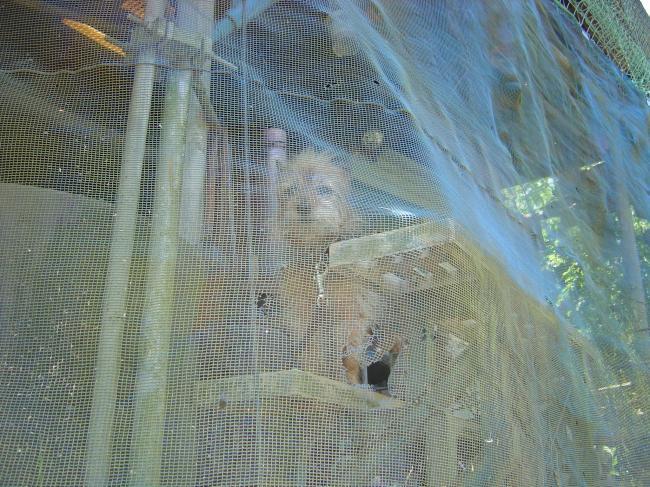 網犬4縮小