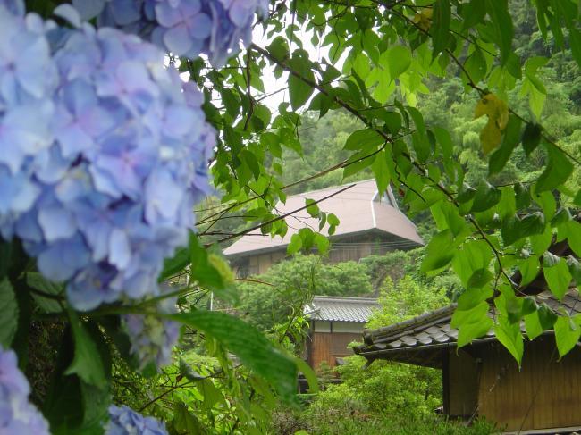 田舎家と紫陽花縮小