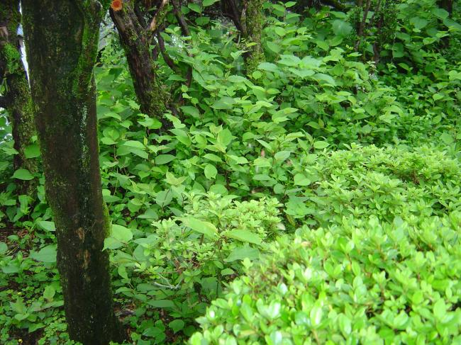 梅雨の緑縮小