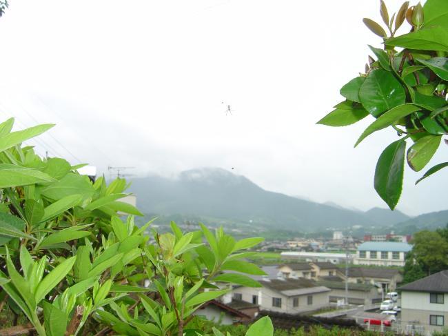 梅雨の蜘蛛縮小