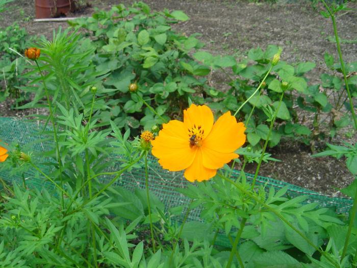 花と蜂縮小
