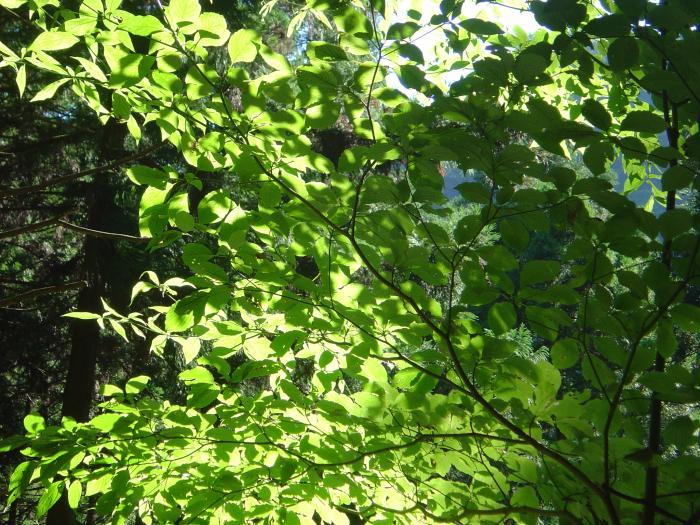 木漏れ日縮小