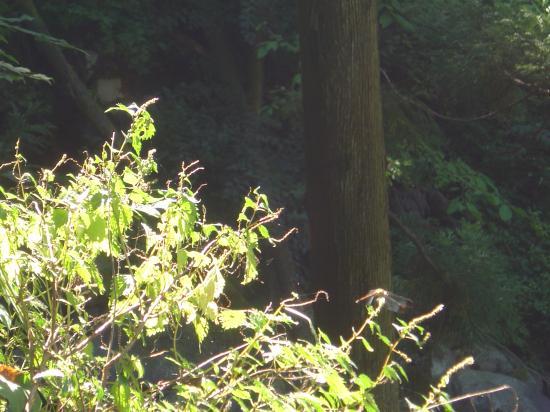 枝先のアキアカネ縮小