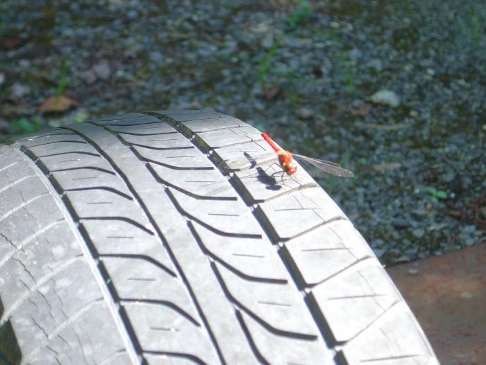 タイヤとアキアカネ縮小