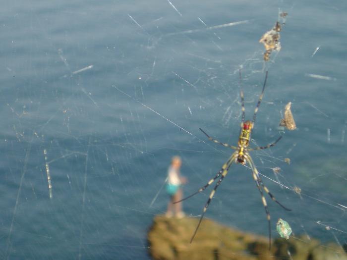 釣り人と蜘蛛の巣縮小