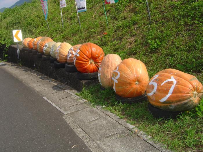 巨大かぼちゃ縮小