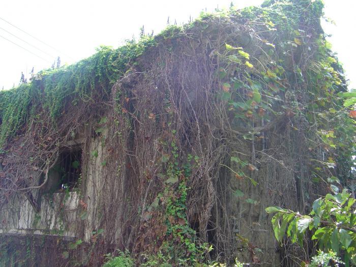 蔦屋敷3縮小