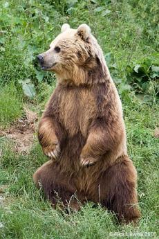 熊画像2中縮小