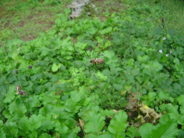 蜘蛛2縮小