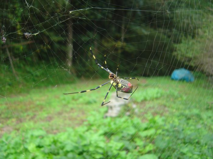 蜘蛛1縮小