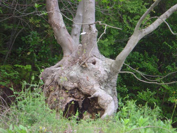 森の精春編縮小