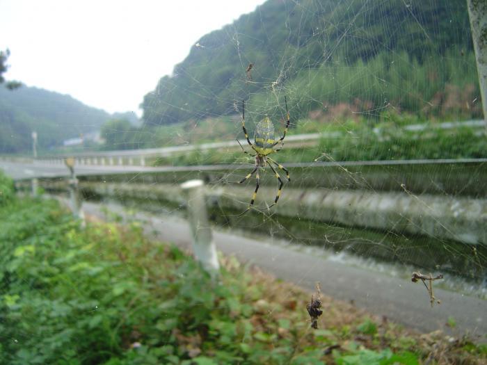 蜘蛛3縮小