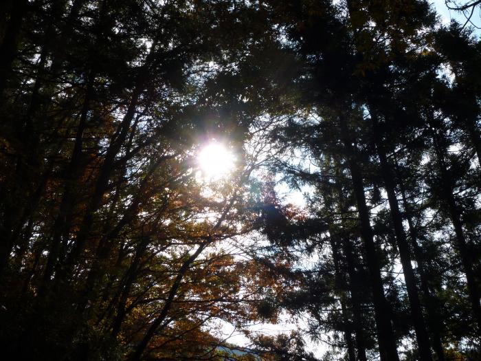 朝日と紅葉縮小