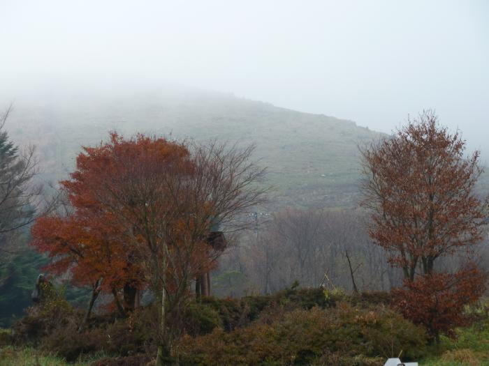 霧の大野ヶ原縮小
